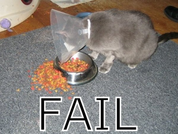 Cat Food Fail
